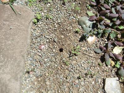 蝉の幼虫が抜け出た穴