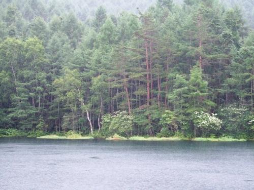 雨の御射鹿池2