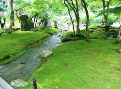石と苔と清流