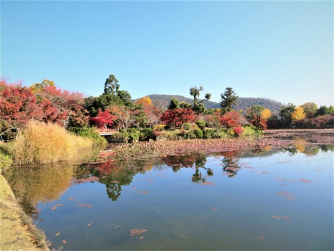大沢の池 天神島の紅葉