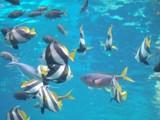 南洋の魚たち