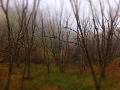 庭の木々、まだ春の訪れは遠い