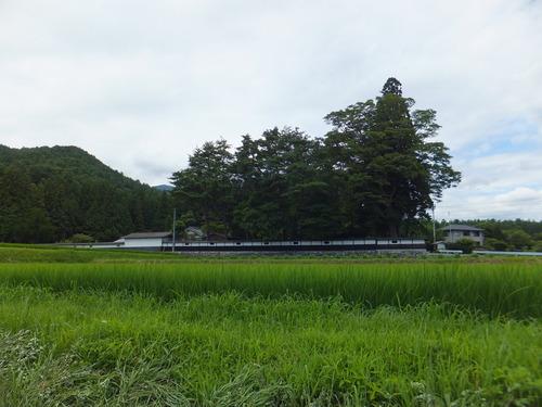 安曇野の大庄屋、山口家の屋敷林