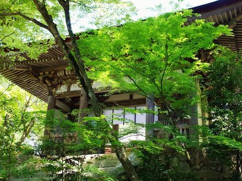 5・新緑の西明寺二天門(重文)