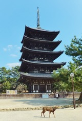 21・興福寺の五重塔と鹿