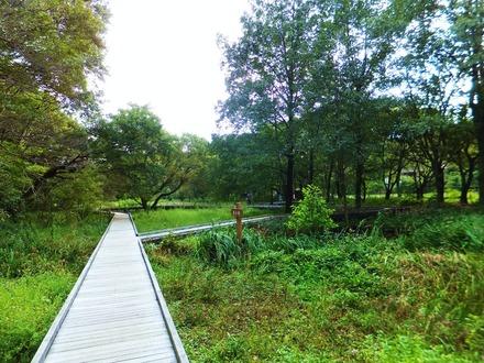 自然観察園内
