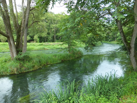 大王わさび園・蓼川にあそぶ川藻
