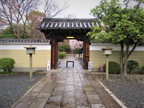 �山門から阿亀桜が見える