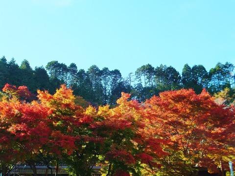秋の陽光に染まる紅葉・展望台