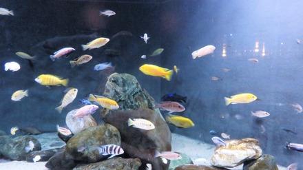 28・高原に泳ぐ熱帯魚