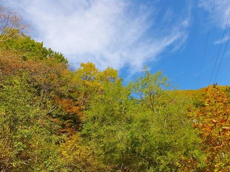 5・秋の空に黄葉が映える