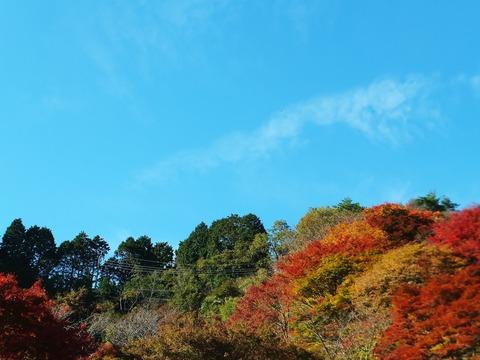 延暦寺有料道路展望台の紅葉はきれい