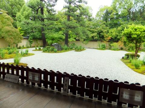 黴雨に濡れる源氏庭