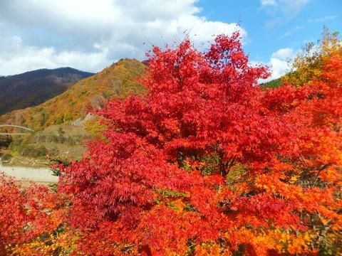紅葉と赤沢橋