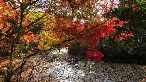 22 紅葉を散らす屋島血の池