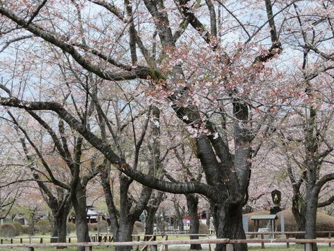 �そば庄近くに桜が有名な聖光寺