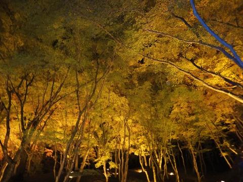 闇に浮かぶ黄葉