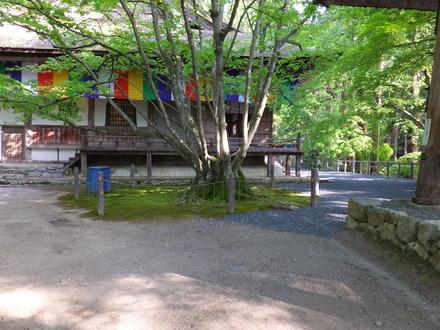 千年菩提樹と本堂