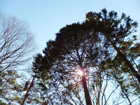 社叢に滴る木漏れ日