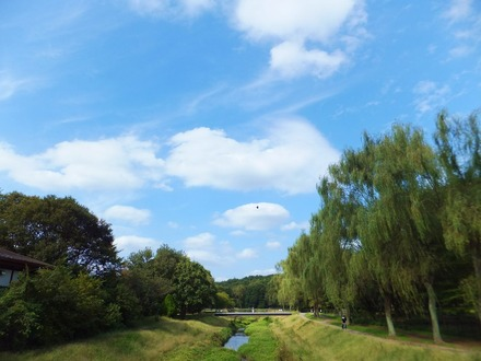 野川公園内を流れる野川