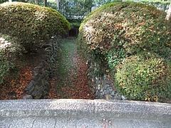 空ら水路に落ちた紅葉