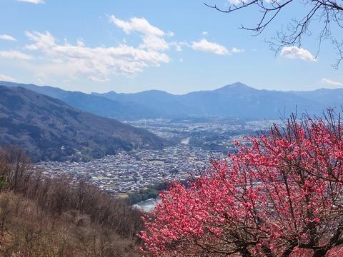 10・紅梅と武甲山
