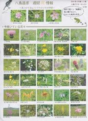 4・八島湿原8月の花