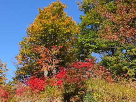 27・下山途中の紅葉