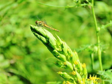 16・蜻蛉