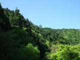 美山荘から見る新緑