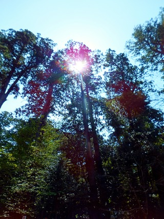 鹿島の原生林
