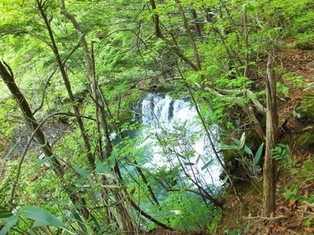 青葉のなか番所小滝