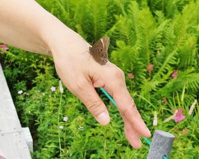 11・手に停まる蝶
