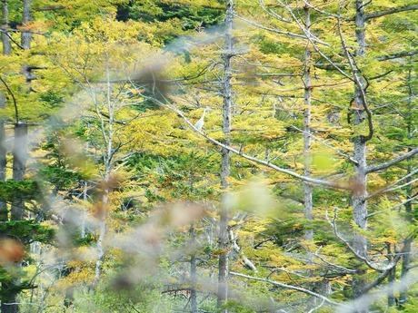 枝にとまる白鷺
