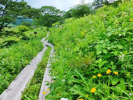 13・八島湿原遊歩道