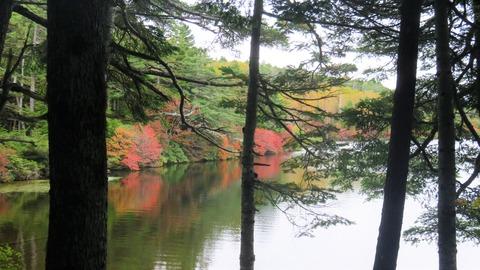 7・樹間の紅葉