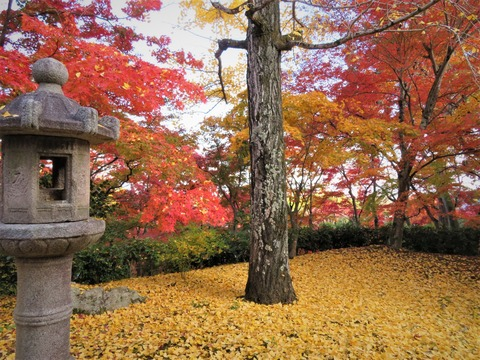常寂光寺 黄葉と紅葉の競演