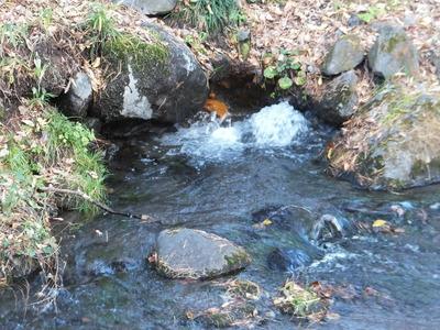三分一湧水の湧水源