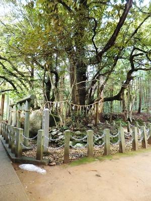 磐座の上には古木が根を張る