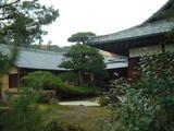 金閣寺 松