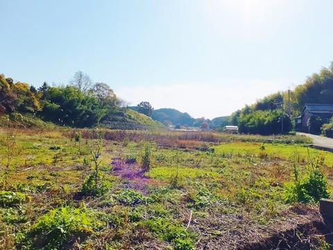 10・稚櫻神社の南裾、東から西を見通す