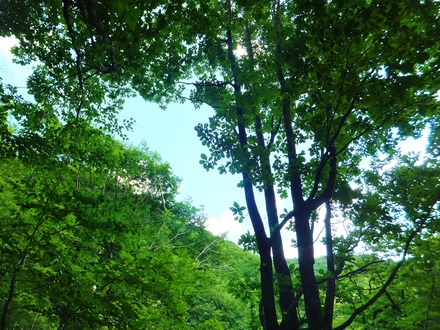 夏樹の緑が目にまぶしい