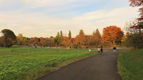 20 昭和記念公園 秋の景色