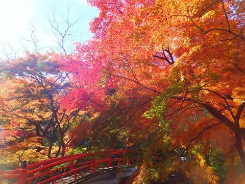 河鹿橋に雪崩れる紅葉