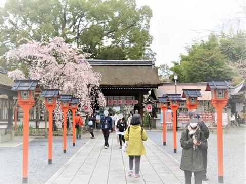 �東神門と魁桜