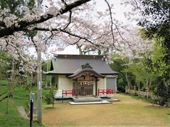 桜と山崎忌部神社