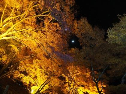 黄葉のなかに月