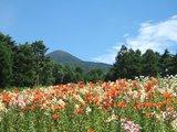天上のゆり園から蓼科山頂を