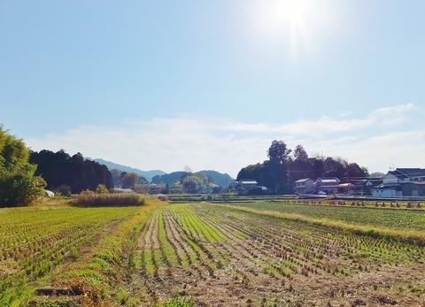 4・丘の頂上に稚櫻神社・北東から見る