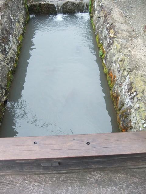 カワに黒い鯉が・・、よく見てください!